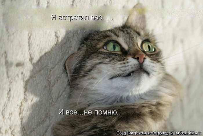 1342938283_kotomatritsa_03 (700x467, 104Kb)