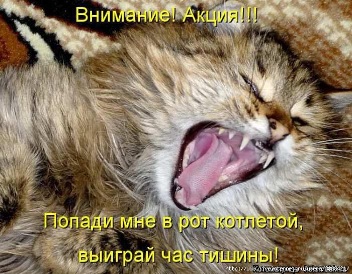 1342938306_kotomatritsa_04 (700x546, 205Kb)