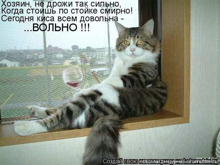 1342938346_kotomatritsa_11 (700x525, 149Kb)