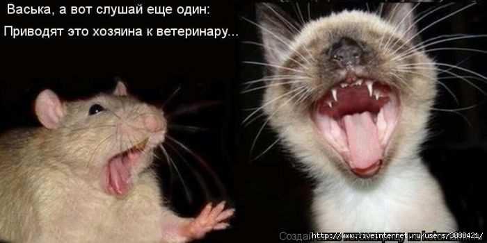 1342938356_kotomatritsa_07 (700x350, 79Kb)