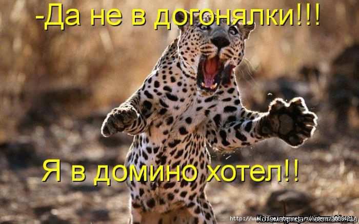 1342938373_kotomatritsa_15 (700x437, 139Kb)