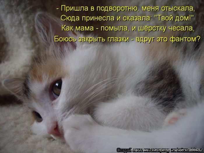 1342938473_kotomatritsa_21 (700x525, 126Kb)
