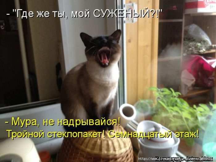 1342938479_kotomatritsa_25 (700x525, 127Kb)