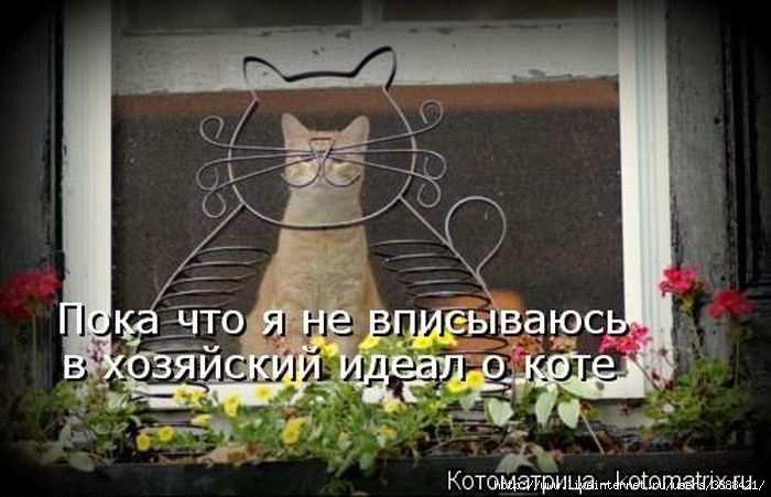 1342938509_kotomatritsa_28 (700x451, 131Kb)