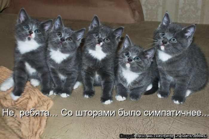 1342938527_kotomatritsa_32 (700x468, 119Kb)