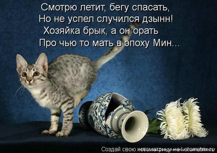 1342938547_kotomatritsa_31 (700x496, 141Kb)