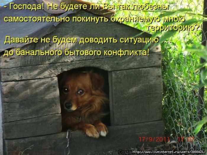 1342938552_kotomatritsa_26 (700x525, 181Kb)