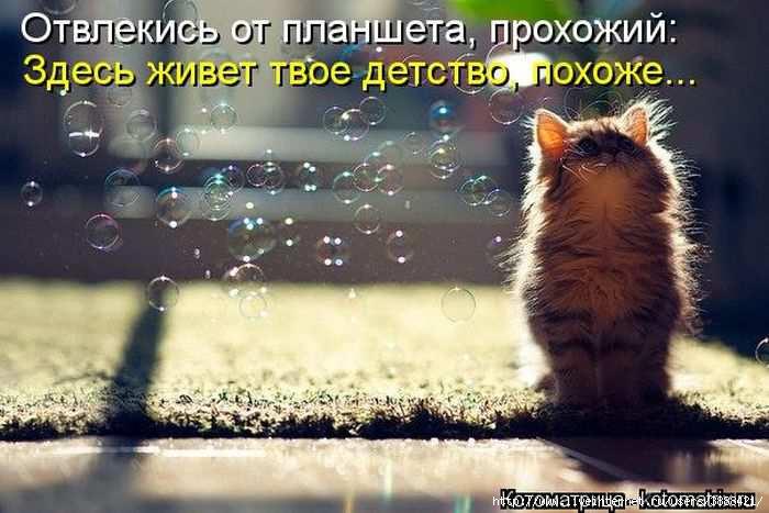 1342938555_kotomatritsa_33 (700x467, 149Kb)