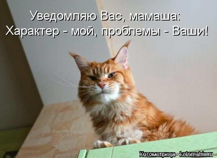 1342938582_kotomatritsa_42 (700x510, 92Kb)