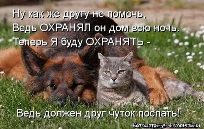 1342938596_kotomatritsa_29 (700x445, 175Kb)