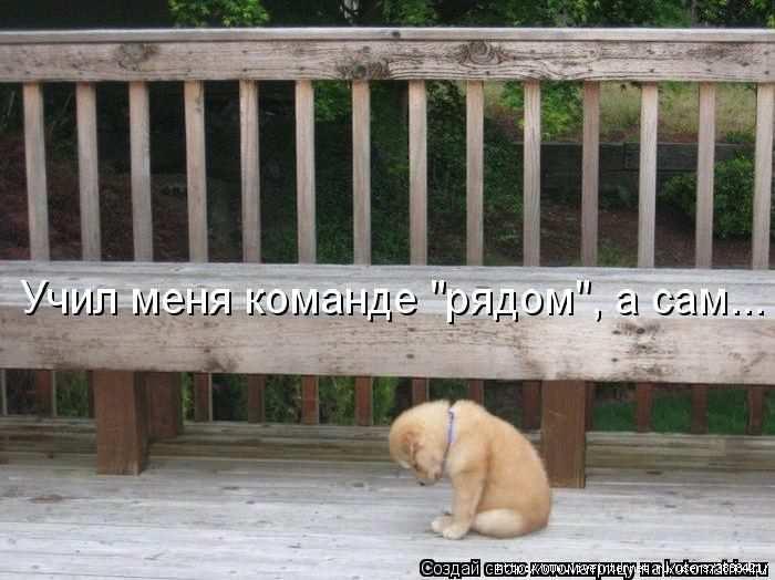 1342938598_kotomatritsa_44 (700x524, 140Kb)
