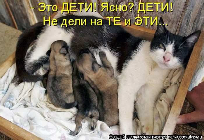 1342938624_kotomatritsa_38 (700x479, 152Kb)
