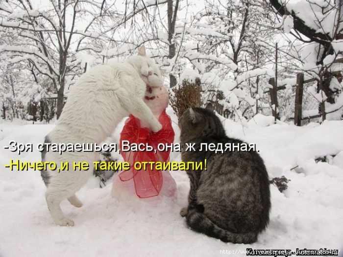 1342938656_kotomatritsa_40 (700x525, 158Kb)