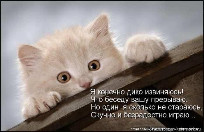1342938688_kotomatritsa_47 (700x455, 105Kb)