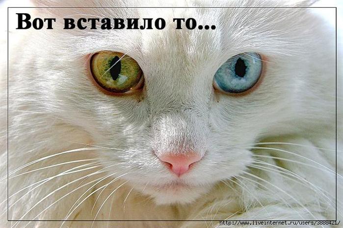 radionetplus_ru_pr_jivn3 (700x466, 268Kb)