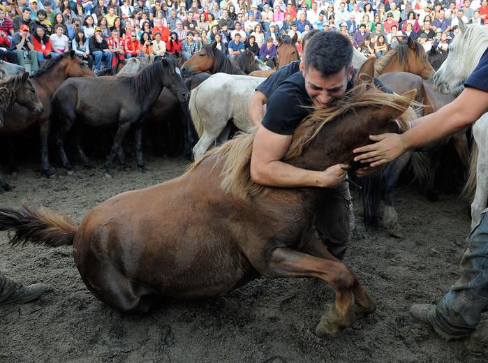 фестиваль клеймения лошадей испания 1 (700x520, 166Kb)