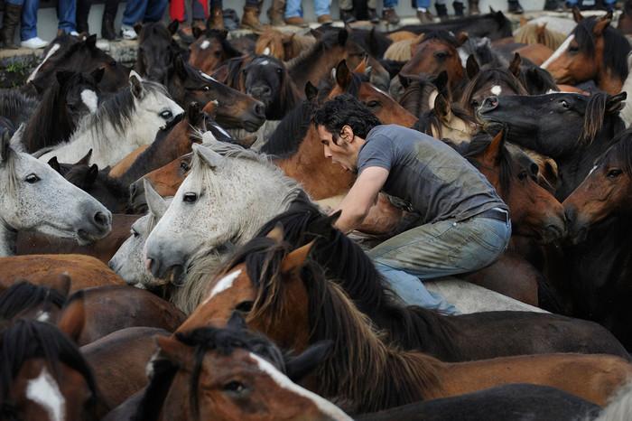 фестиваль клеймения лошадей испания 4 (700x466, 116Kb)