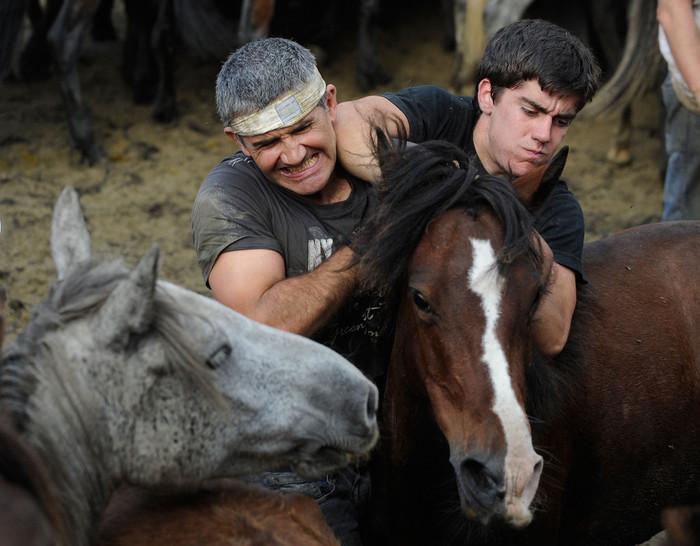 фестиваль клеймения лошадей испания 7 (700x546, 102Kb)