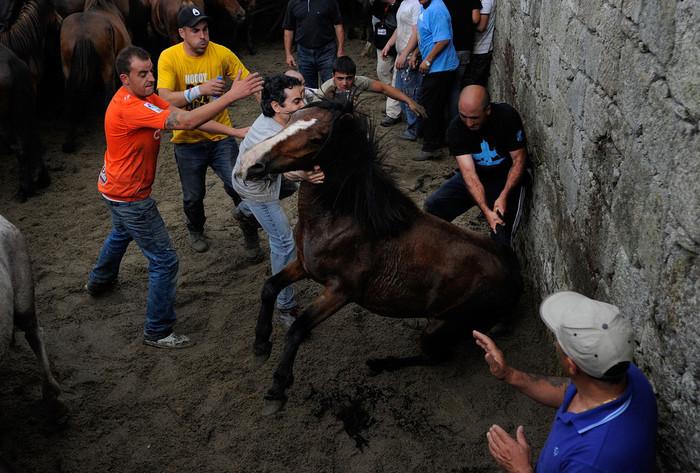 фестиваль клеймения лошадей испания 10 (700x473, 133Kb)