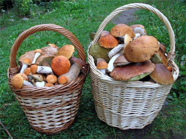 грибы (640x480, 103Kb)
