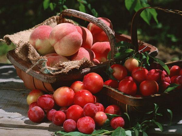 фрукты (600x450, 56Kb)