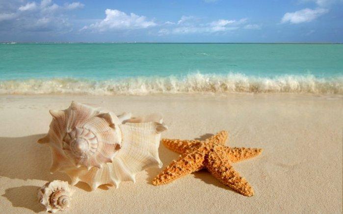 морские ракушки фото 1 (700x436, 46Kb)