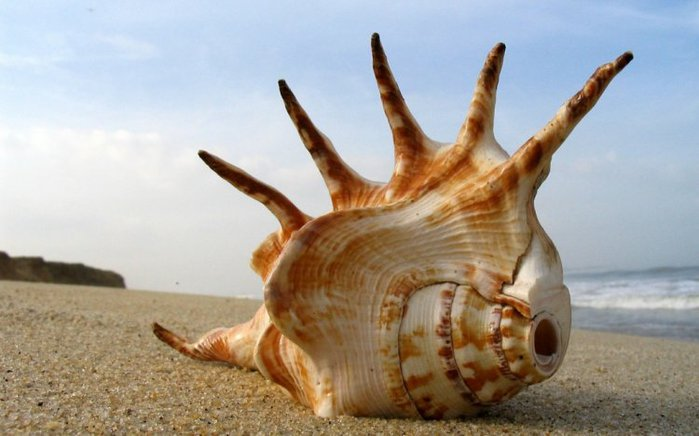 морские ракушки фото 2 (700x436, 51Kb)