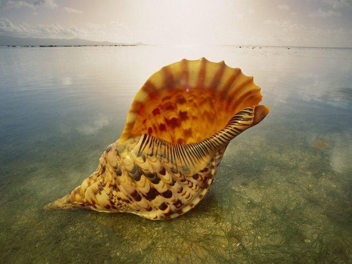 морские ракушки фото 3 (700x524, 63Kb)