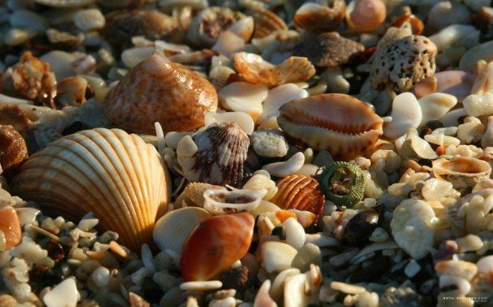 морские ракушки фото 15 (700x436, 69Kb)
