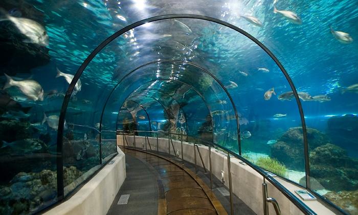 аквариум в барселоне 2 (700x421, 273Kb)