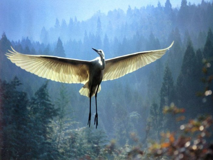 bird (700x525, 56Kb)