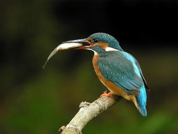 жизнь птиц15 (570x427, 45Kb)