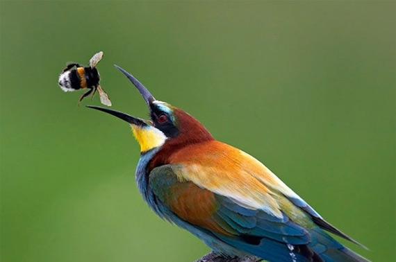 жизнь птиц17 (570x378, 40Kb)