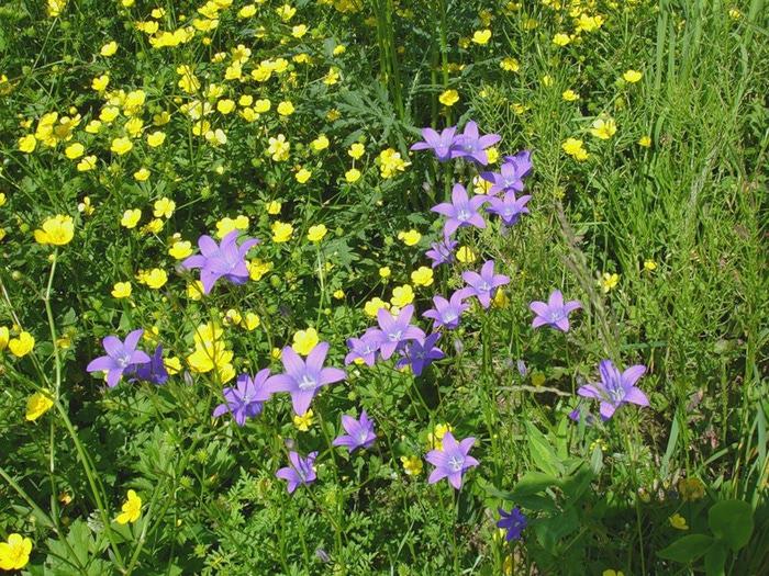 Июльские цветочно полевые мотивы