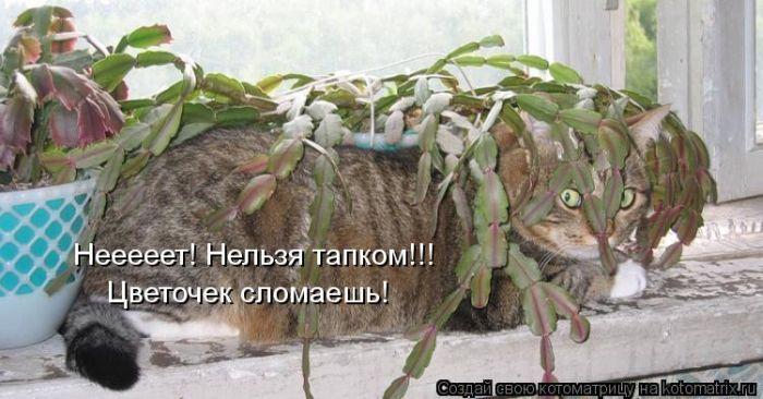 cats_m_01108_001 (700x366, 62Kb)