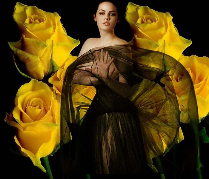 Желтые розы (700x600, 75Kb)