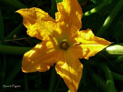 abeille fleur courg (400x300, 21Kb)