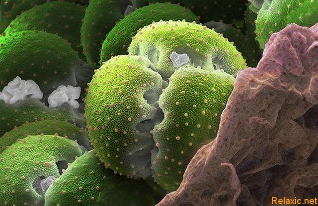 pollen_001 (640x416, 90Kb)