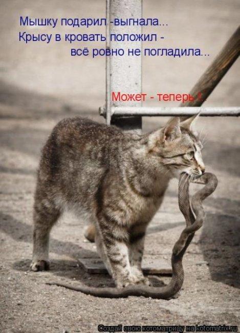 1315308253_kotomatrix_40 (469x650, 62Kb)