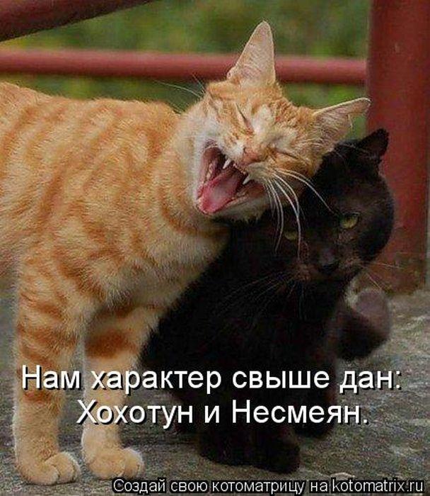 kotomatrix_22 (608x700, 80Kb)