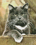Превью Cat on a Fence_14 (566x700, 487Kb)