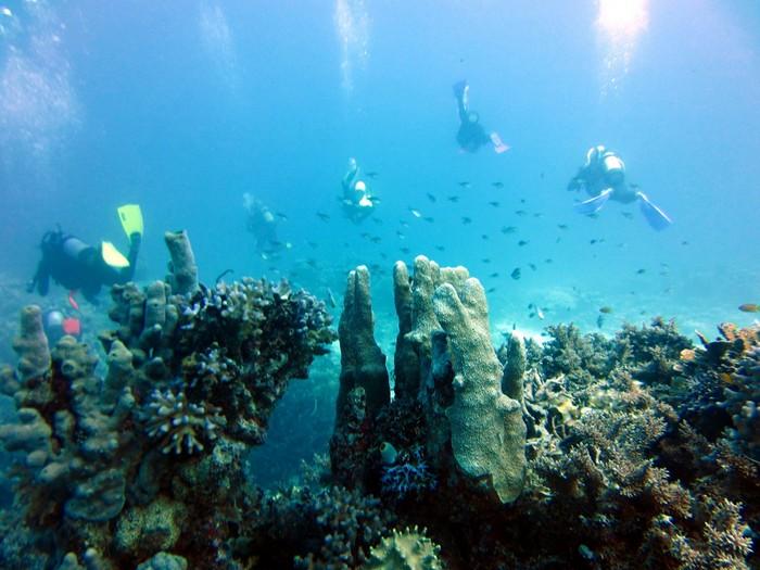 Лучшие достопримечательности Австралии - Большой Барьерный Риф 2 (700x525, 100Kb)