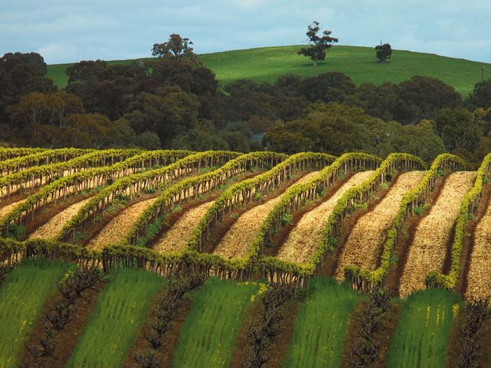 Лучшие достопримечательности Австралии - Долина Баросса 2 (700x525, 138Kb)