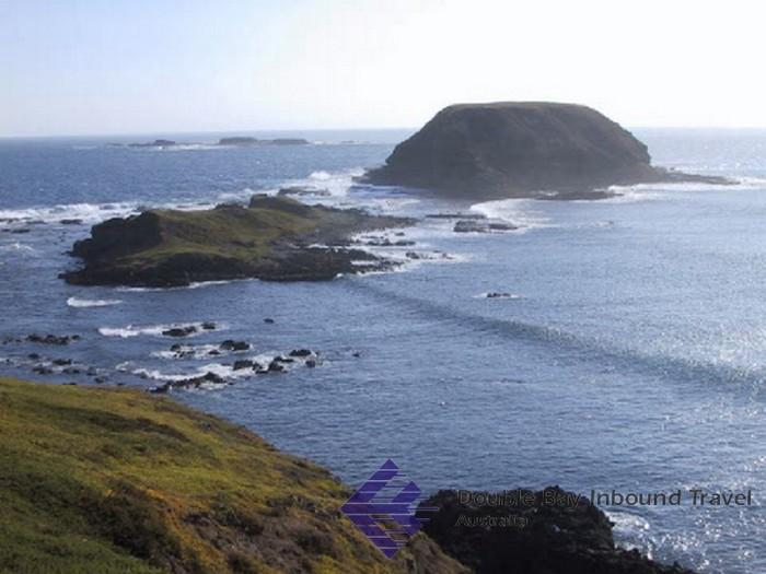 Лучшие достопримечательности Австралии - Остров Филлип 2 (700x525, 80Kb)