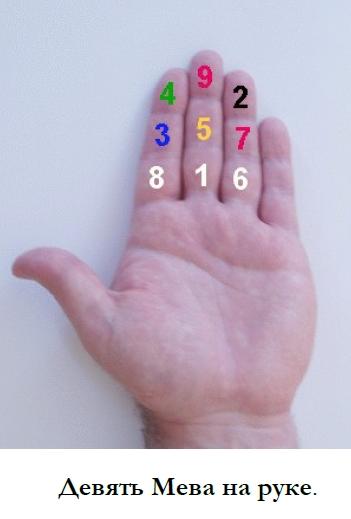 9 мева на руке (351x519, 91Kb)