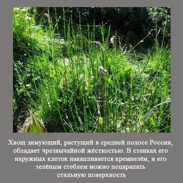interesnye_fakty_o_istorii_rossii_27_foto_7 (600x600, 100Kb)