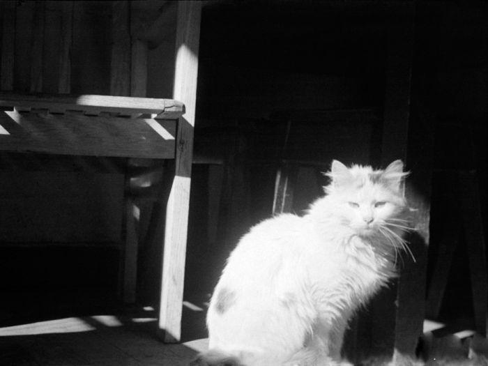 Cats_07 (700x525, 44Kb)