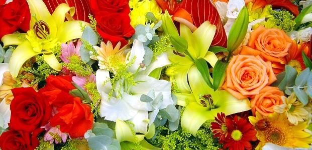 Совместимые и несовместимые цветы (621x300, 126Kb)