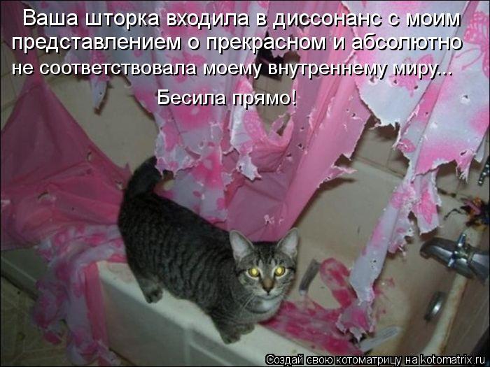 kotomatritsa_nv (700x525, 66Kb)