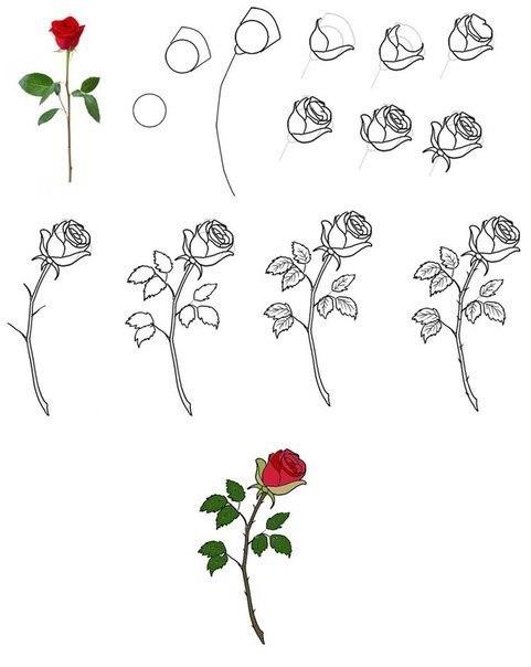Как нарисовать розочку?